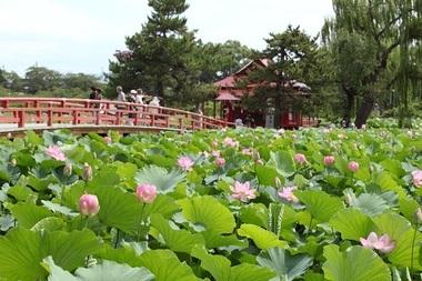 猿賀神社の蓮.jpg